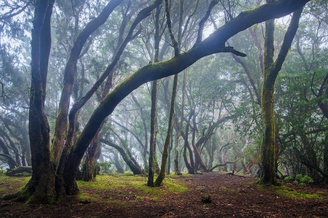 Anaga tenerife islas canarias canary island espana spain fog forest laurel