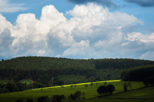 Kericho Tea Plantations
