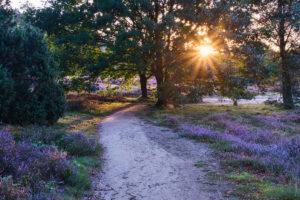 Westruper Heide im Sonnenlicht