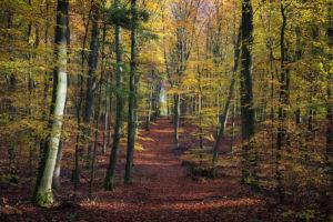Haard Autumn Haltern