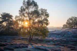 sunrise westruper heide