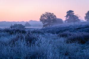 westruper heide frost